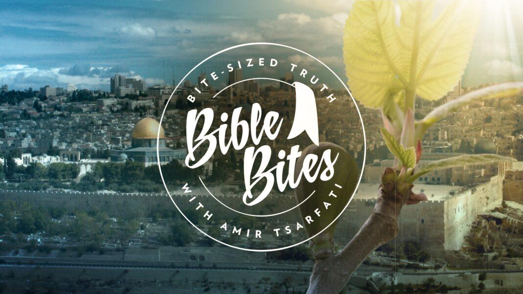 Fig Tree, Bible Bite